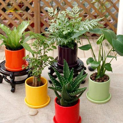 龟背竹/芦荟/鸟巢蕨 办公室绿植 室内桌面创意小盆栽