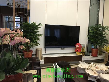长沙家庭租花————北辰中央公园